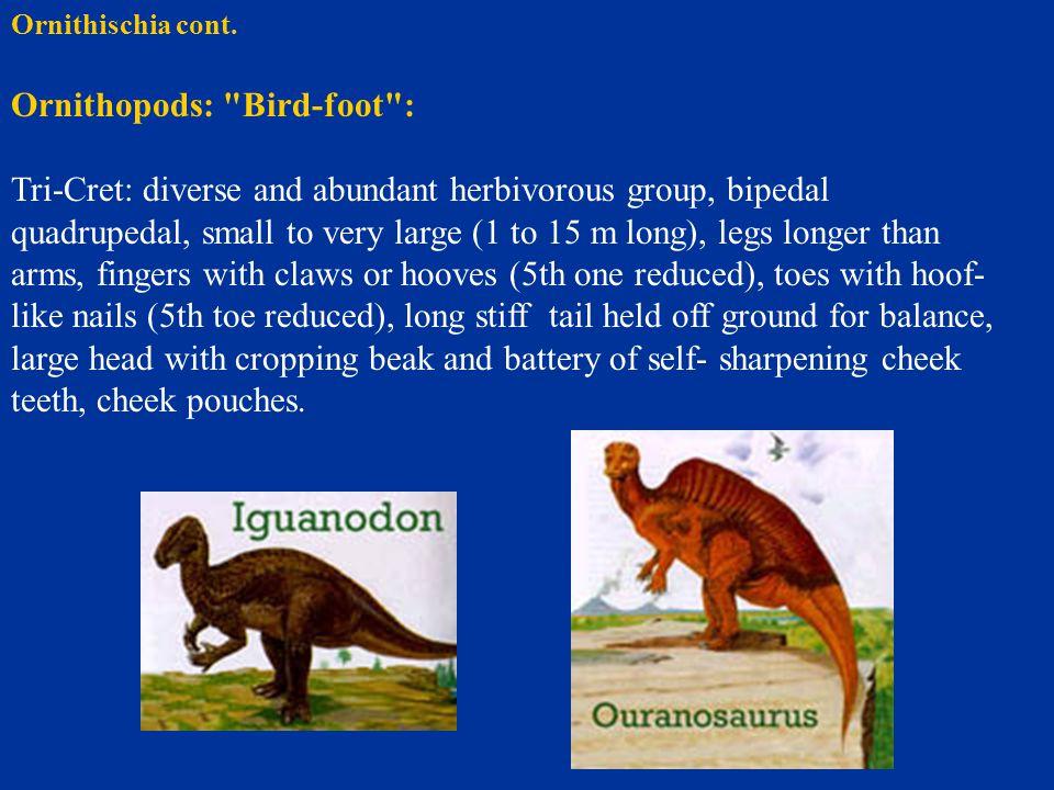 Ornithopods: Bird-foot :