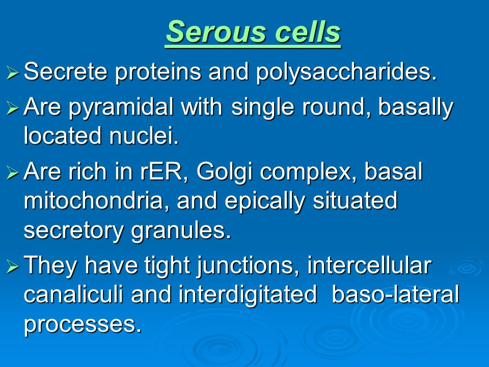Serous cells Secrete proteins and polysaccharides.