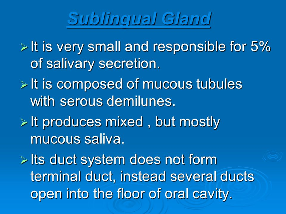 Sublingual Gland It is very small and responsible for 5% of salivary secretion. It is composed of mucous tubules with serous demilunes.