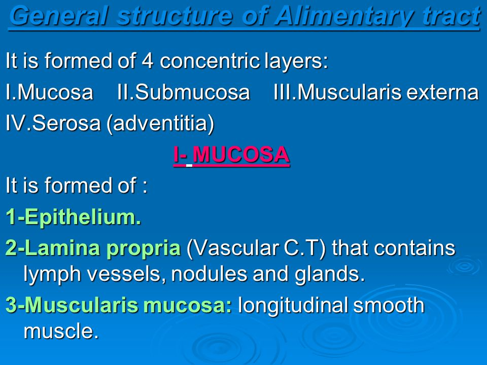 General structure of Alimentary tract