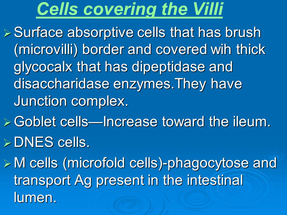 Cells covering the Villi