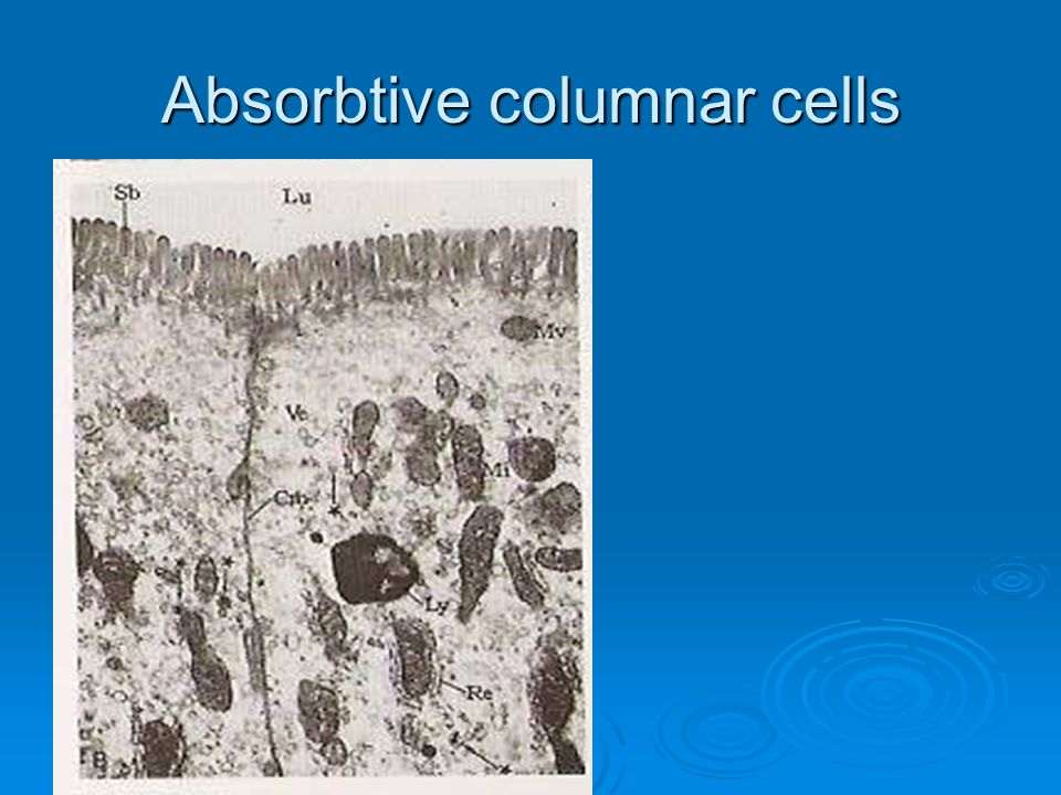 Absorbtive columnar cells