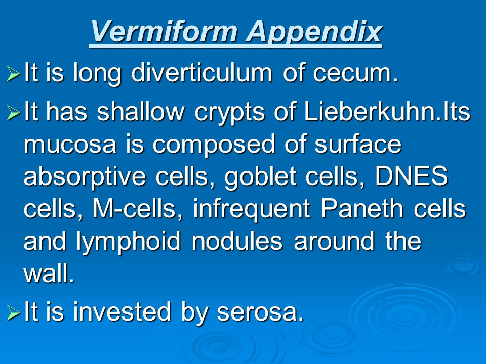 Vermiform Appendix It is long diverticulum of cecum.