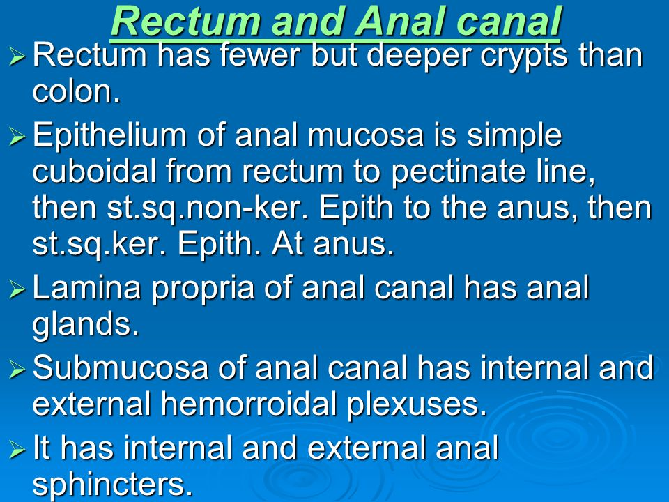 Rectum and Anal canal Rectum has fewer but deeper crypts than colon.
