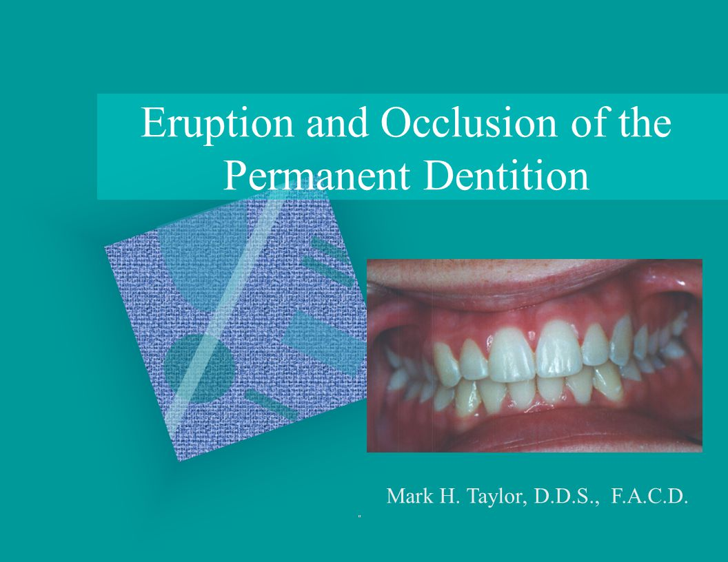 Eruption and Occlusion of the Permanent Dentition