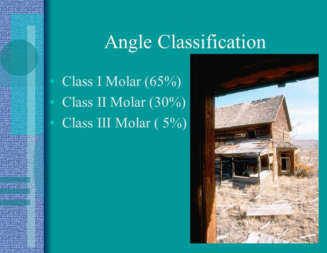 Angle Classification Class I Molar (65%) Class II Molar (30%)