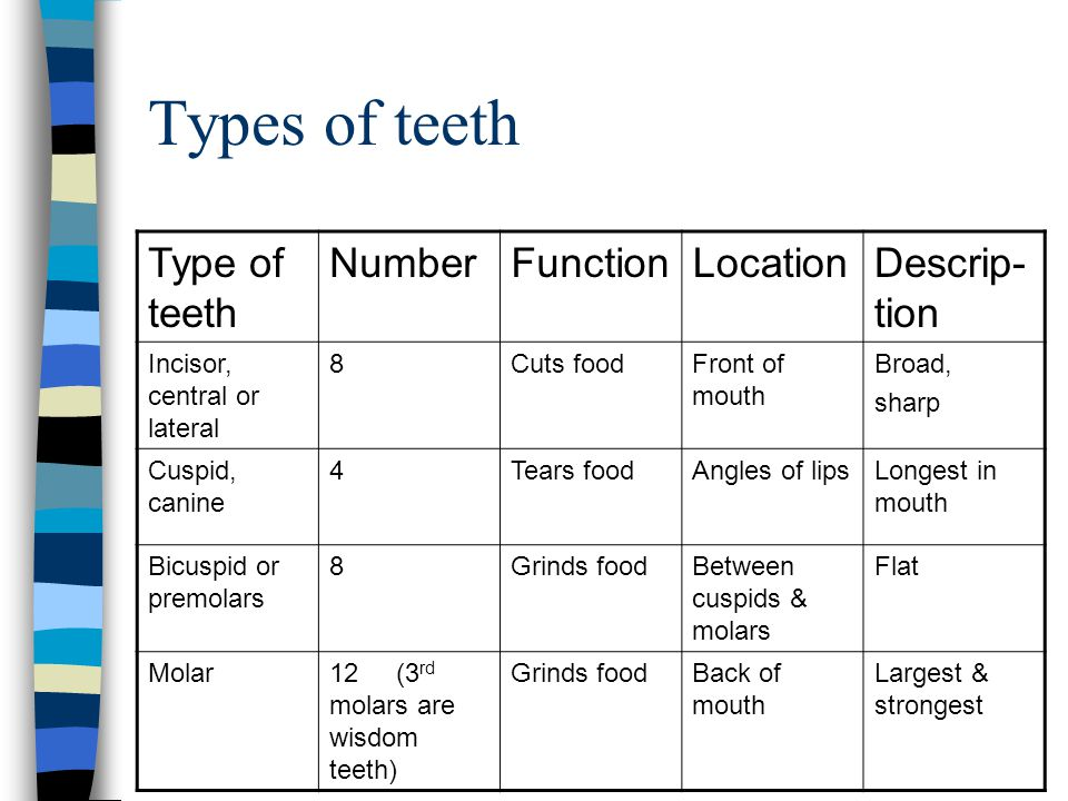 Types of teeth Type of teeth Number Function Location Descrip-tion