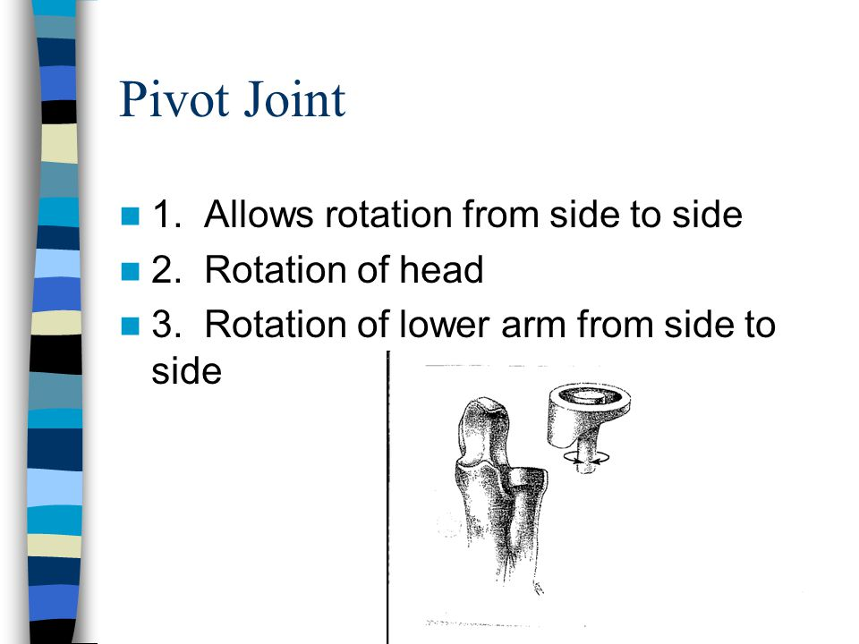 Pivot Joint 1. Allows rotation from side to side 2. Rotation of head