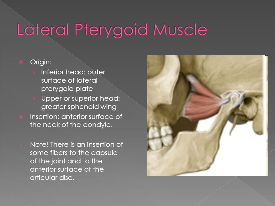 Lateral Pterygoid Muscle