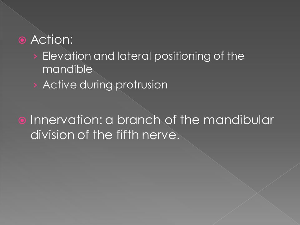 Innervation: a branch of the mandibular division of the fifth nerve.