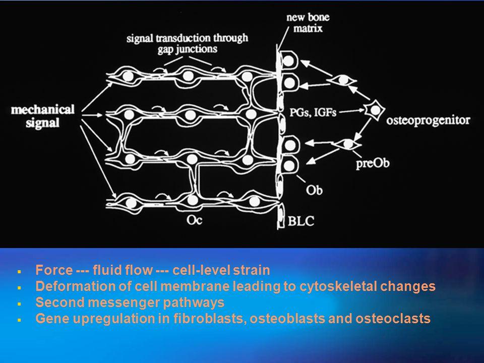 Force --- fluid flow --- cell-level strain