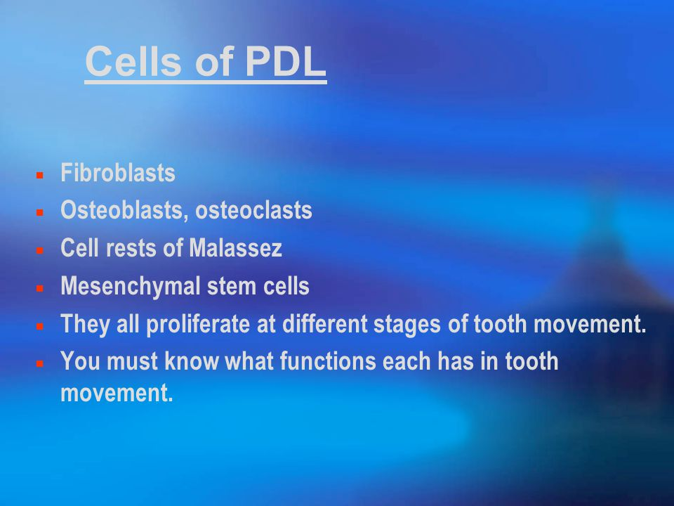 Cells of PDL Fibroblasts Osteoblasts, osteoclasts