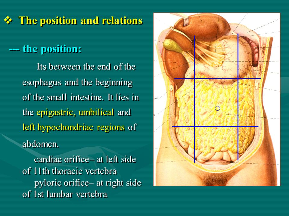 The position and relations --- the position: