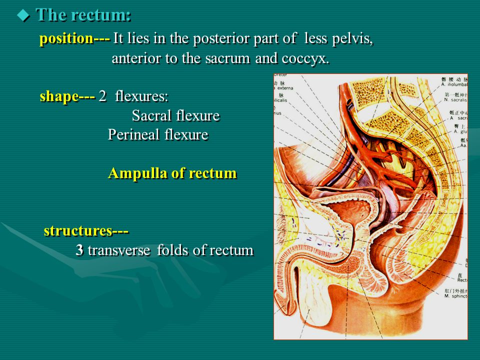 position--- It lies in the posterior part of less pelvis,