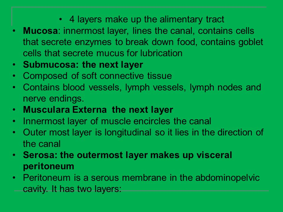 4 layers make up the alimentary tract
