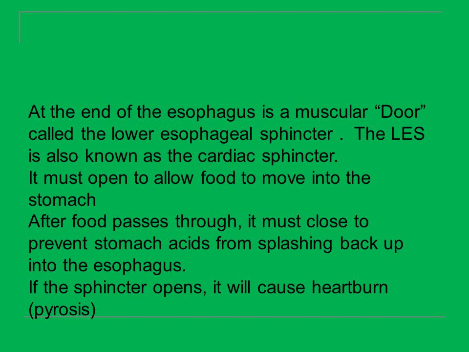 At the end of the esophagus is a muscular Door called the lower esophageal sphincter . The LES is also known as the cardiac sphincter.