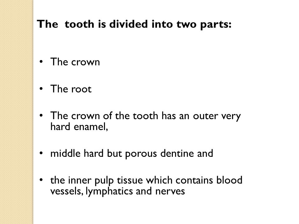 The tooth is divided into two parts: