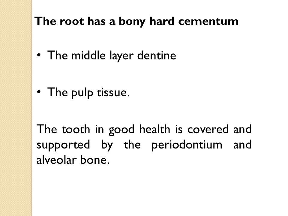 The middle layer dentine The pulp tissue.
