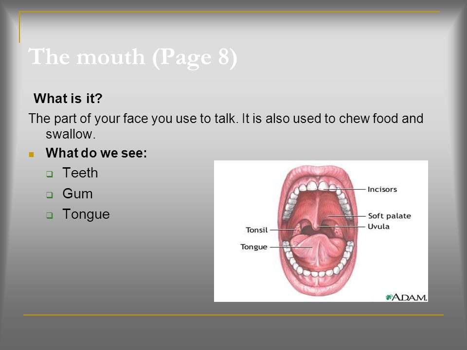 The mouth (Page 8) What is it Teeth Gum Tongue