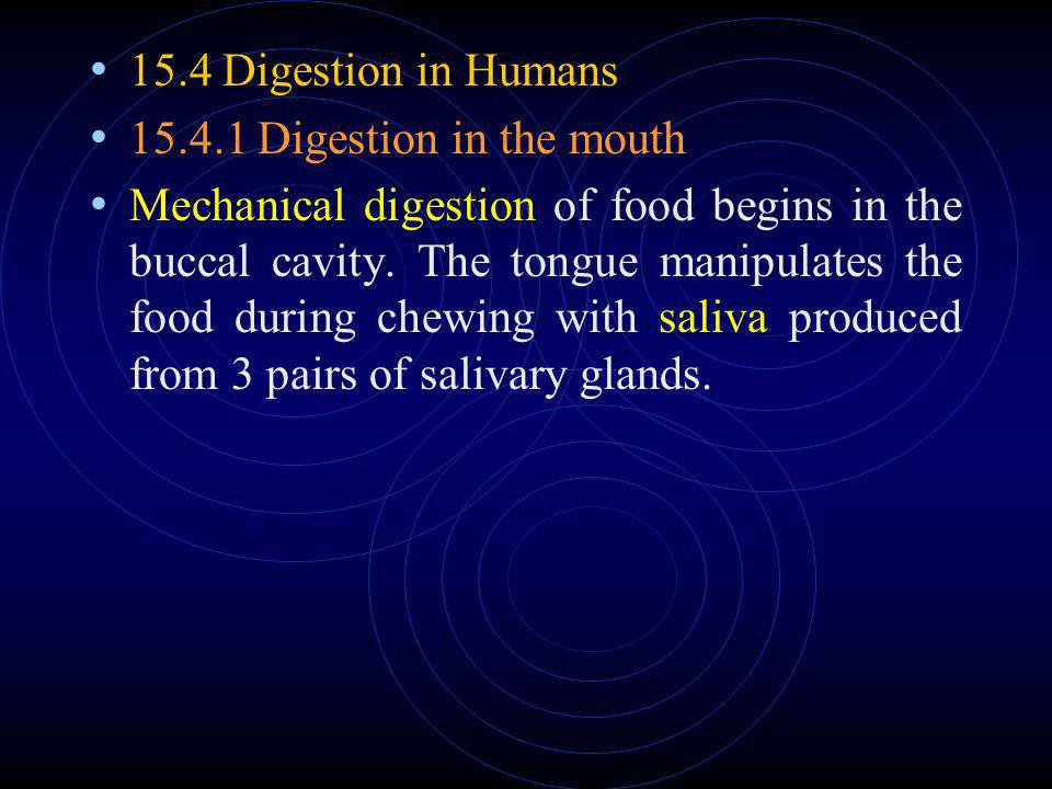 15.4 Digestion in Humans 15.4.1 Digestion in the mouth.
