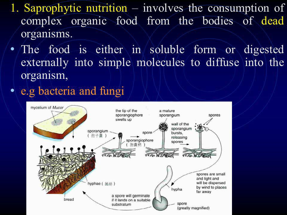 1. Saprophytic nutrition – involves the consumption of complex organic food from the bodies of dead organisms.