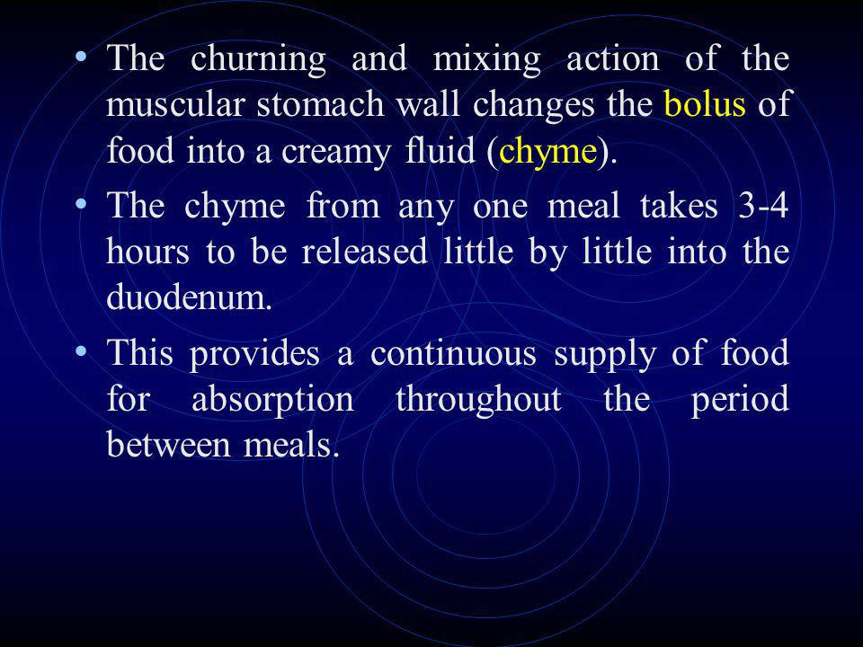 The churning and mixing action of the muscular stomach wall changes the bolus of food into a creamy fluid (chyme).