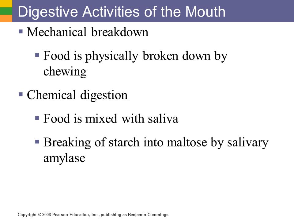 Digestive Activities of the Mouth