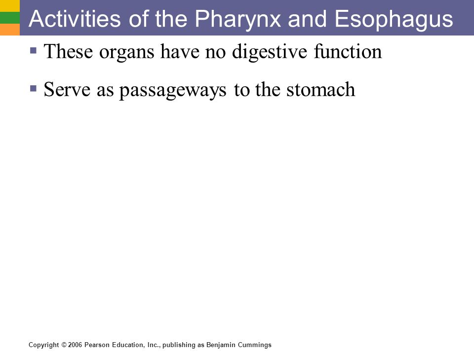Activities of the Pharynx and Esophagus