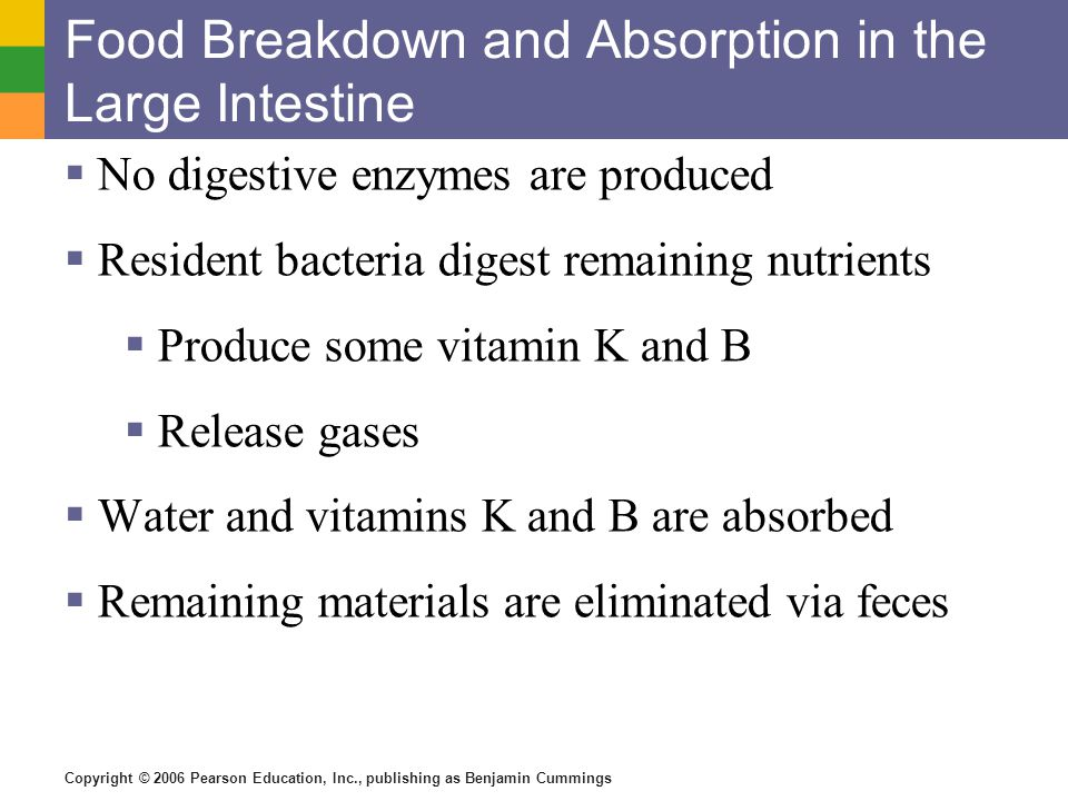 Food Breakdown and Absorption in the Large Intestine