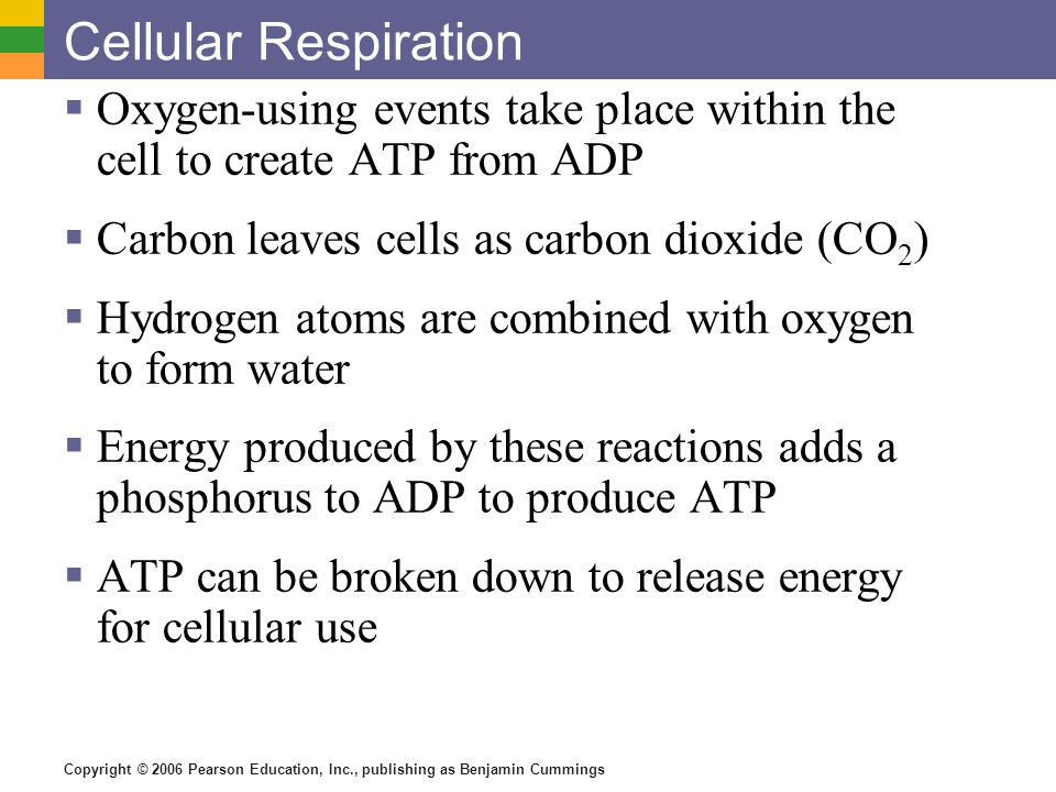 Cellular Respiration Oxygen-using events take place within the cell to create ATP from ADP. Carbon leaves cells as carbon dioxide (CO2)