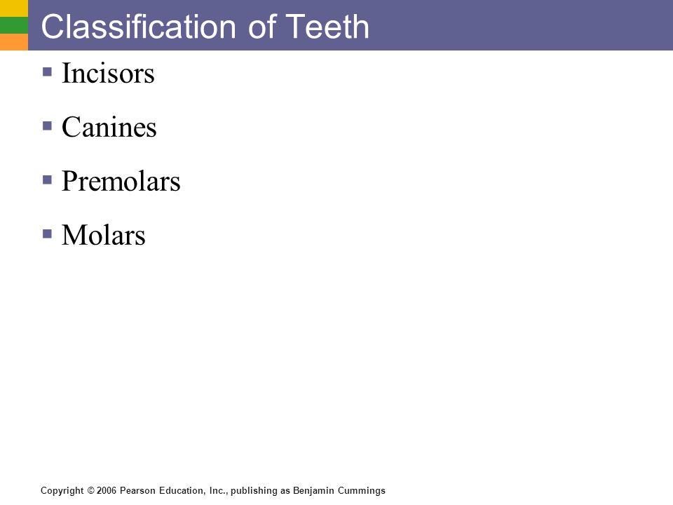 Classification of Teeth
