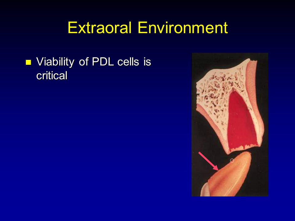 Extraoral Environment