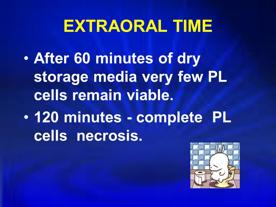 EXTRAORAL TIME After 60 minutes of dry storage media very few PL cells remain viable.