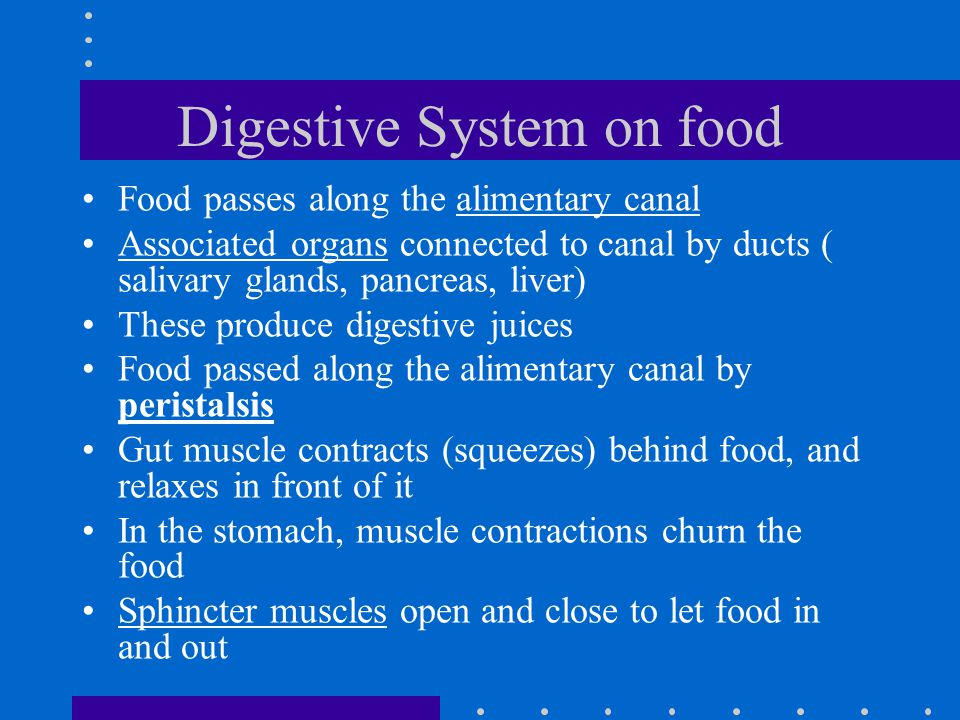 Digestive System on food