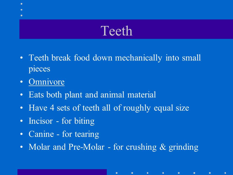 Teeth Teeth break food down mechanically into small pieces Omnivore
