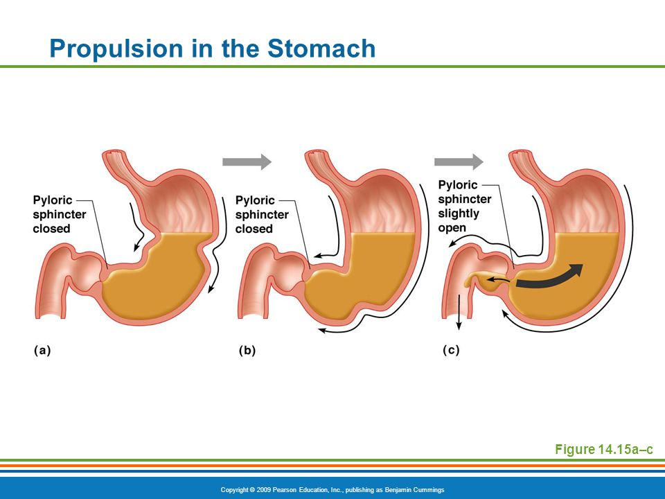 Propulsion in the Stomach