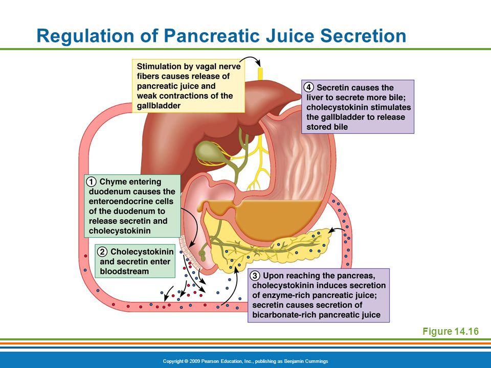 Regulation of Pancreatic Juice Secretion