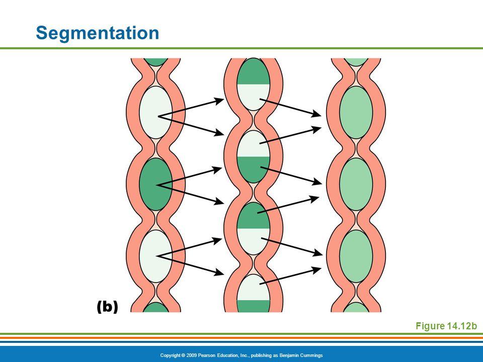 Segmentation Figure 14.12b