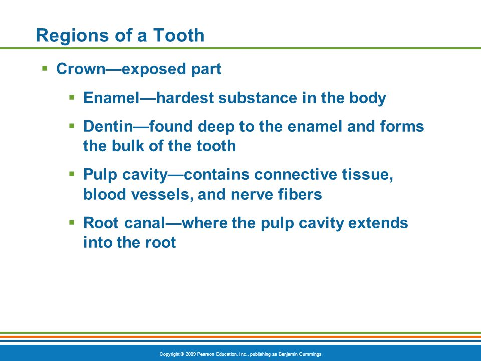 Regions of a Tooth Crown—exposed part
