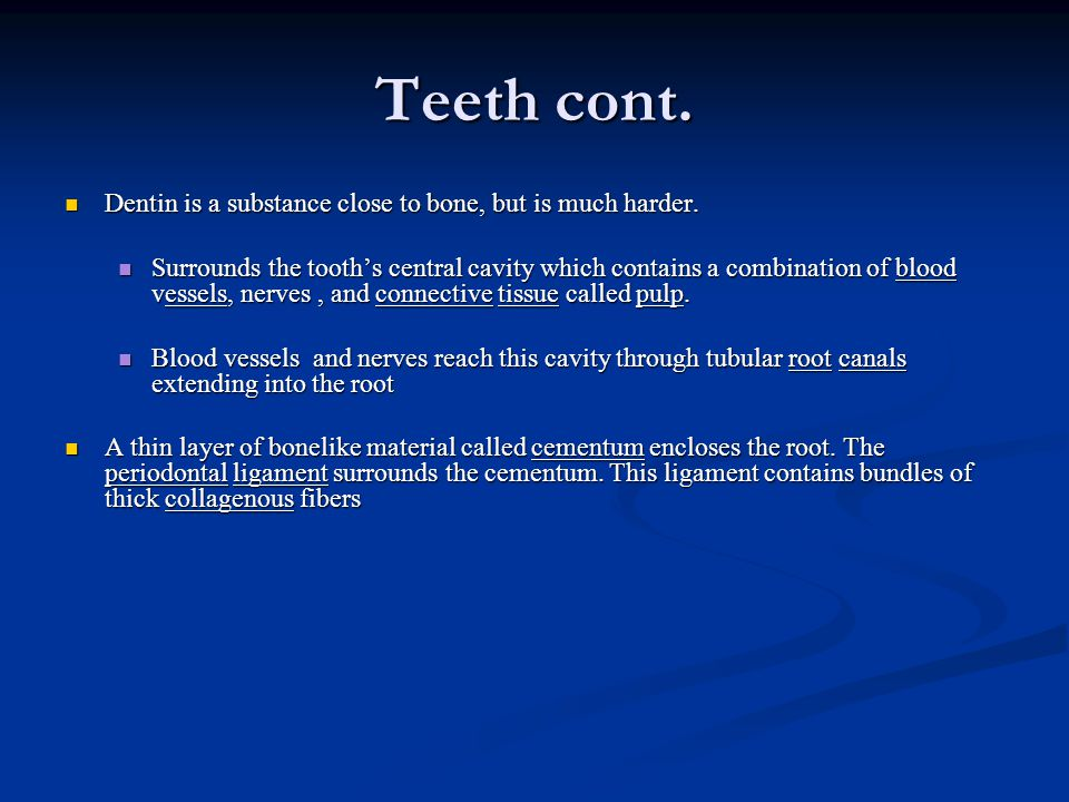 Teeth cont. Dentin is a substance close to bone, but is much harder.