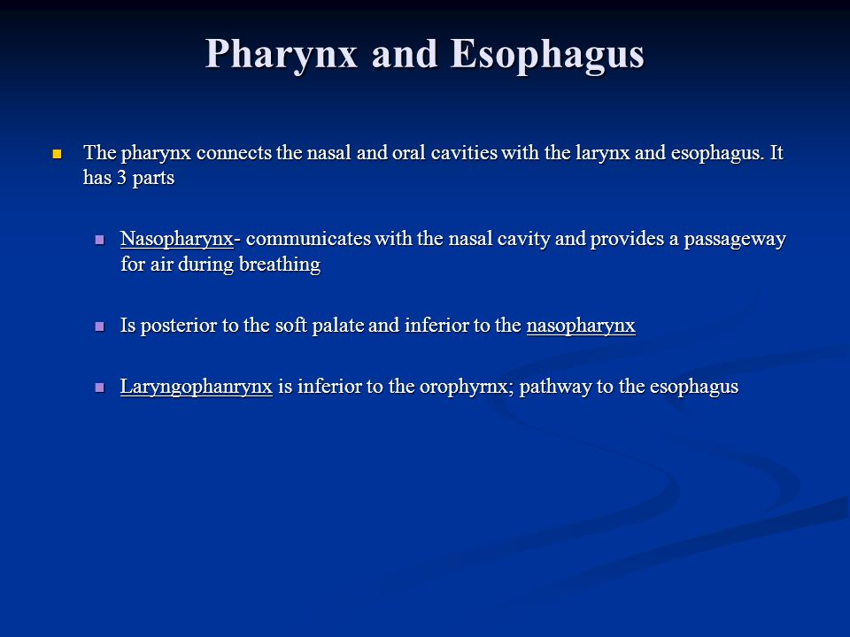 Pharynx and Esophagus The pharynx connects the nasal and oral cavities with the larynx and esophagus. It has 3 parts.