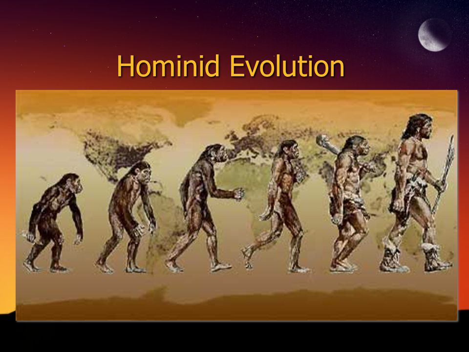 Evolution of bipedal locomotion