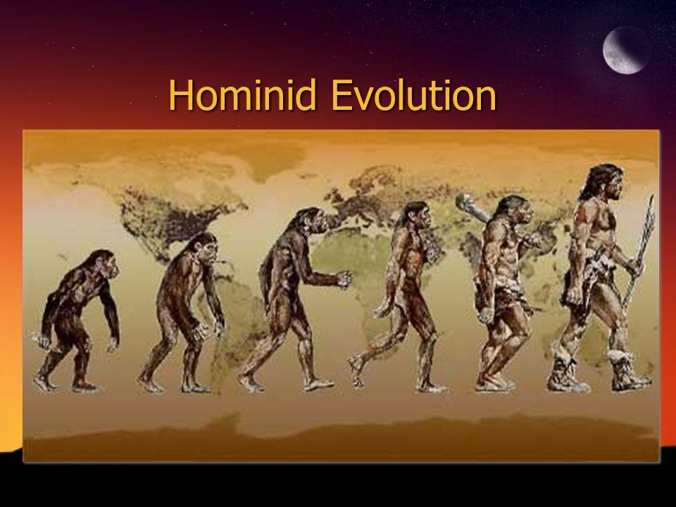 Hominid Evolution
