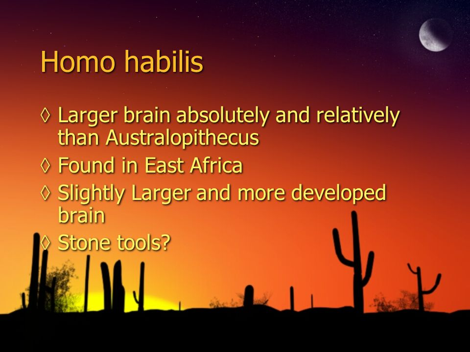 Homo habilis Larger brain absolutely and relatively than Australopithecus. Found in East Africa. Slightly Larger and more developed brain.