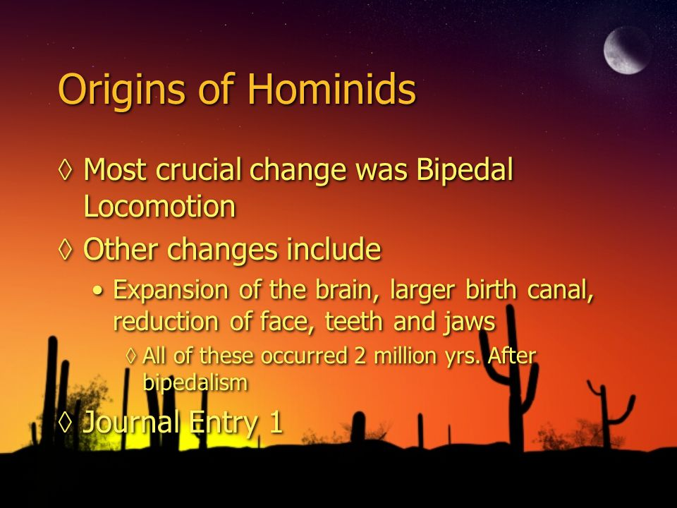 Origins of Hominids Most crucial change was Bipedal Locomotion