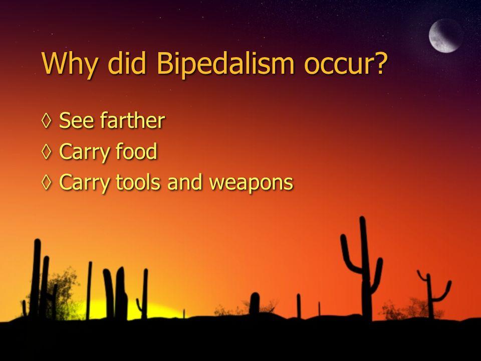 Why did Bipedalism occur