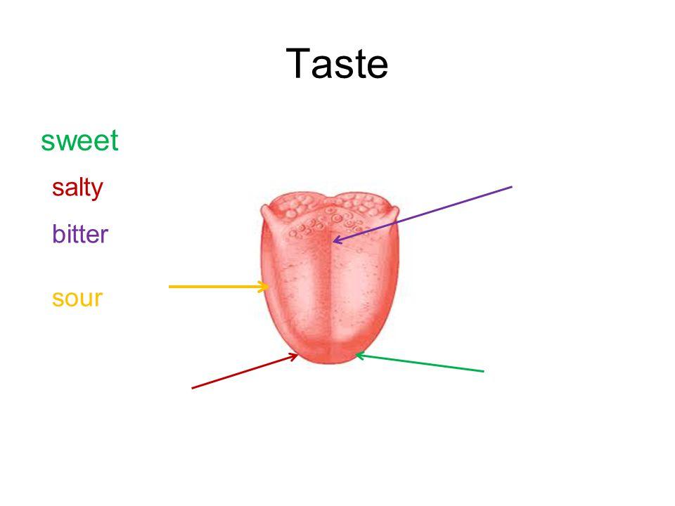 Taste sweet salty bitter sour