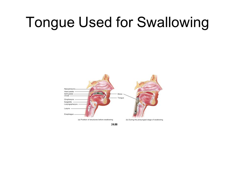 Tongue Used for Swallowing