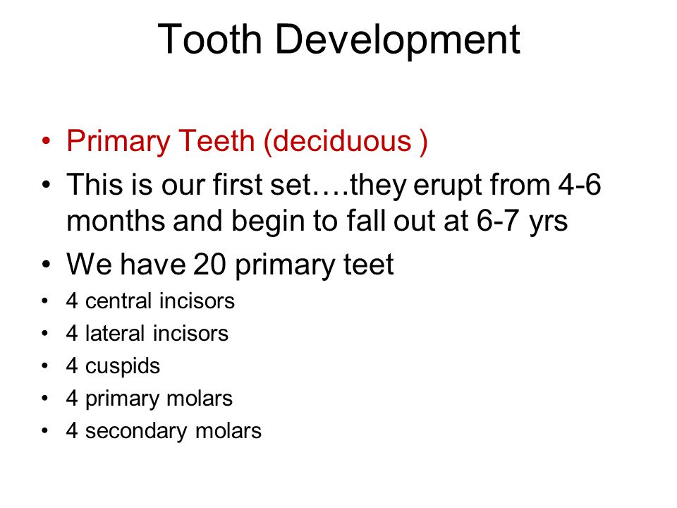 Tooth Development Primary Teeth (deciduous )