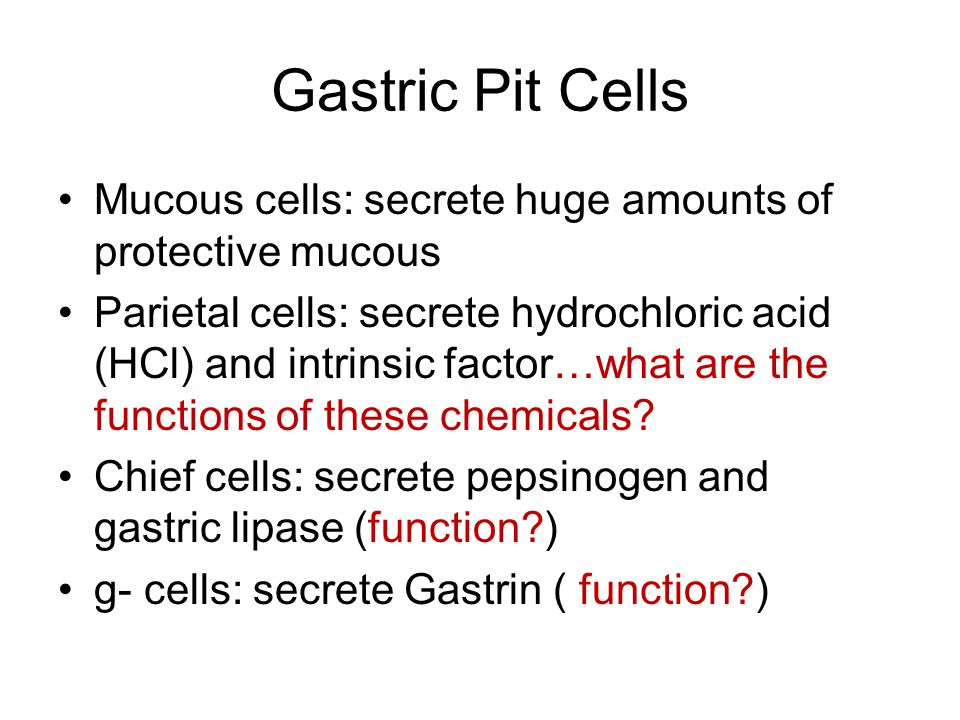Gastric Pit Cells Mucous cells: secrete huge amounts of protective mucous.